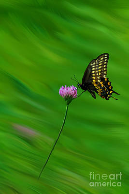 Photograph - Butterfly Flying Over Flower by Dan Friend