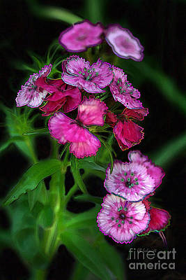 Digital Art - Butterfly Garden 02 - Carnations by E B Schmidt