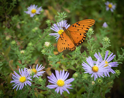 Butterfly Garden Art Print by James Barber