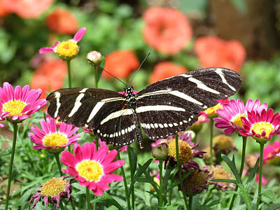 Photograph - Butterfly Garden by Laurel Powell
