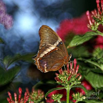 Photograph - Butterfly Garden by Peggy Hughes