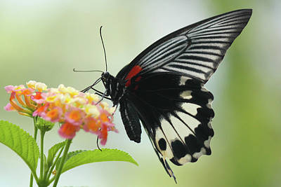 Photograph - Butterfly by Getty Images