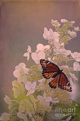 Butterfly Glow Art Print by Elizabeth Winter