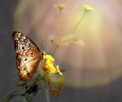 Butterfly Glow Art Print by Judy Vincent