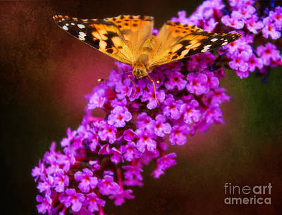 Photograph - Butterfly Gold by Elizabeth Winter