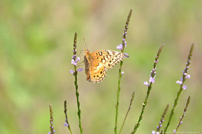 Photograph - Butterfly Grass by Teresa Blanton