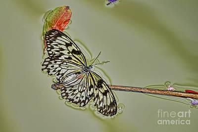 Photograph - Butterfly Haiku by Olga and Robert W Hamilton Jr