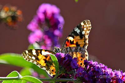 Butterfly Hiding Art Print by Jay Nodianos