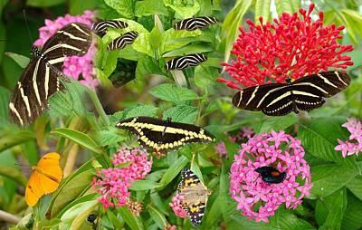Butterfly High Art Print