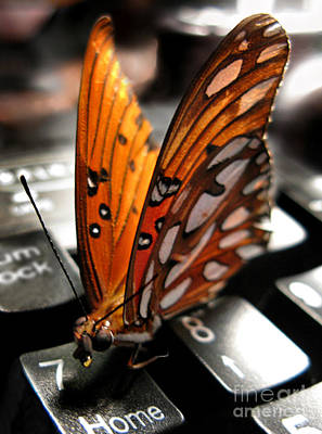 Art Print featuring the photograph Butterfly Home At 7 by Jennie Breeze