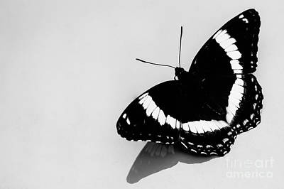 Photograph - Butterfly In Black And White by Bianca Nadeau