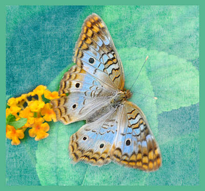Photograph - Butterfly In Blue by Diane Wood