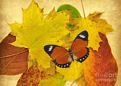 Photograph - Butterfly In Fall  by Mindy Bench