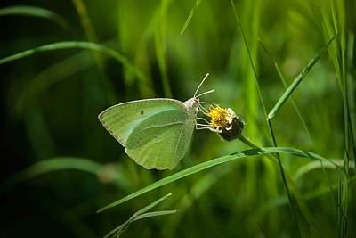 Butterfly In Green Original by Jayaganesh NS