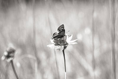 Photograph - Butterfly In Macedonia by For Ninety One Days