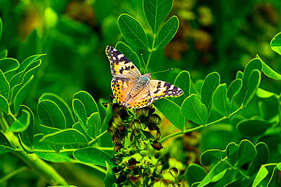 Photograph - Butterfly In Paradise by Gunter Nezhoda