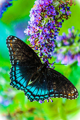 Photograph - Butterfly In The Garden by Connie Dye