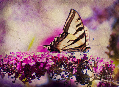 Photograph - Butterfly In The Garden by Jim And Emily Bush