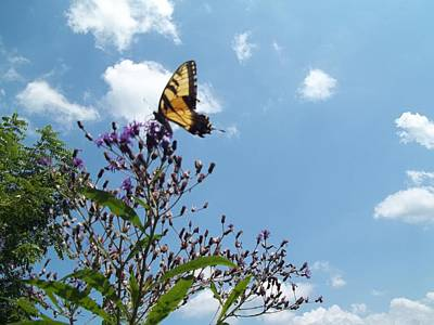 Photograph - Butterfly In The Wild by Eric Switzer