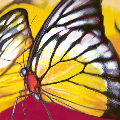 Butterfly - Insect Stylised Pop Art Drawing Potrait Poser Art Print by Kim Wang