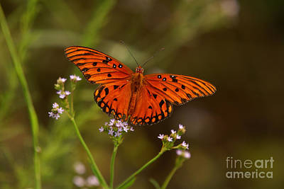 Photograph - Butterfly by J Cheyenne Howell