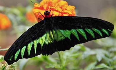 Butterfly Art Print by Jose Carlos Fernandes De Andrade