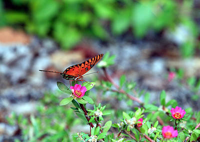 Photograph - Butterfly by Joseph C Hinson Photography