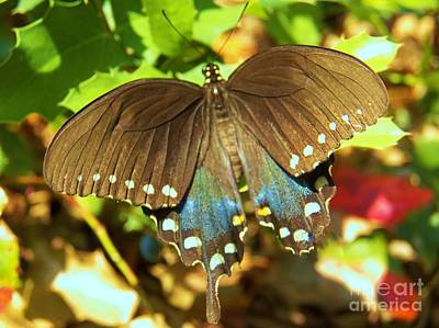 Photograph - Butterfly by Judy Via-Wolff