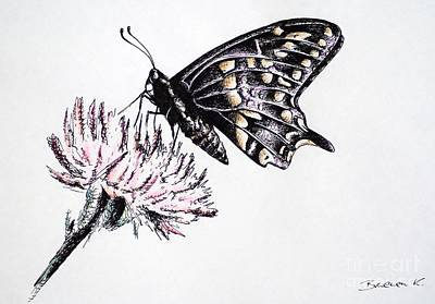 Drawing - Butterfly by Katharina Filus