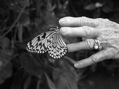 Photograph - Butterfly Kiss by Shannon Grissom