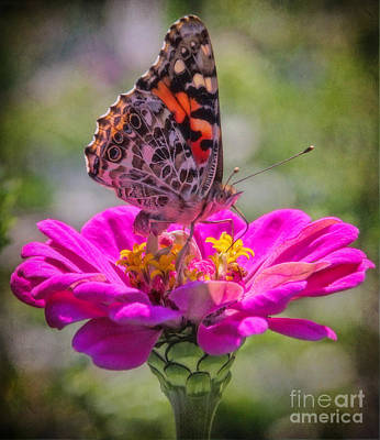Photograph - Butterfly Kisses by Elizabeth Winter