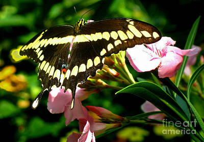 Art Print featuring the photograph Butterfly by Kristine Merc