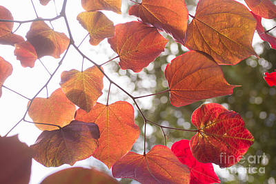 Photograph - Butterfly Leaves by Rima Biswas