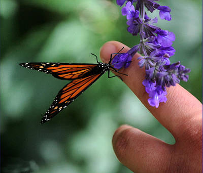 Art Print featuring the photograph Butterfly by Leticia Latocki