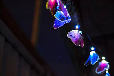 Art Print featuring the photograph Butterfly Lights Hanging At Night  by Naomi Burgess