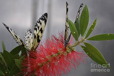 Art Print featuring the photograph Butterfly Love by Carla Carson