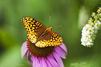Butterfly On Flower Photograph - Butterfly Love by Christina Rollo
