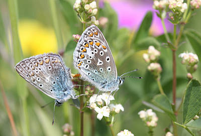 Photograph - Butterfly Lovers by Dreamland Media
