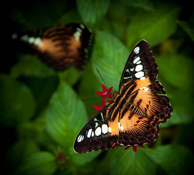 Forest Floor Photograph - Butterfly Delight by Karen Wiles
