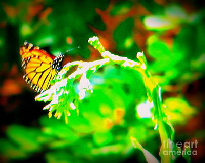 Photograph - Butterfly Magic by Bobbee Rickard