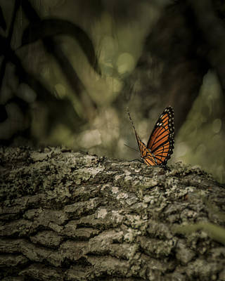 Butterfly Art Print by Mario Celzner