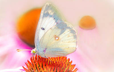 Butterfly Art Print by Marion Johnson
