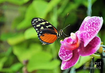 Photograph - Butterfly by Matthew Naiden