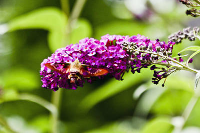 Clouds Rights Managed Images - Butterfly Moth 9 Royalty-Free Image by Dennis Coates