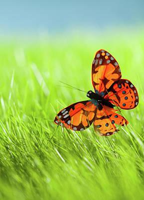 Photograph - Butterfly by Nadyaphoto