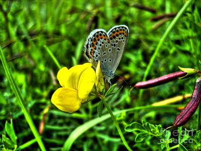 Photograph - Butterfly And Flower by Nina Ficur Feenan
