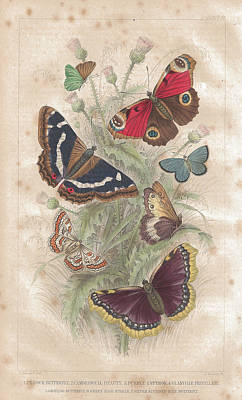 Butterfly Digital Art - Butterfly Old Lithographic Print From by Lusky