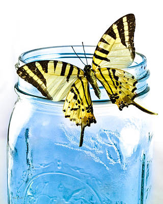 Framed Inspirational Wildlife Photograph - Butterfly On A Blue Jar by Bob Orsillo