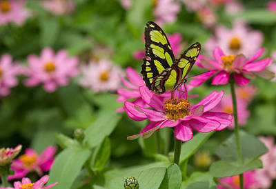 Photograph - Butterfly On A Flower by Leah Palmer