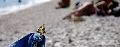 Cala Photograph - Butterfly On Beach Bag, Cala Luna by Panoramic Images